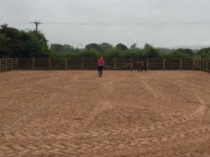 Equine Sand School